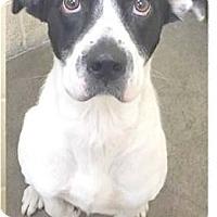 Adopt A Pet :: Mario - Springdale, AR