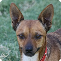 Adopt A Pet :: Selma - Edmonton, AB