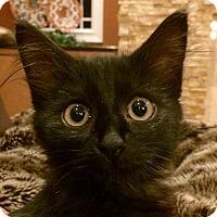 Adopt A Pet :: Hershey - Cincinnati, OH