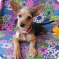 Adopt A Pet :: Penny Marie - Phoenix, AZ