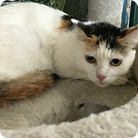 Adopt A Pet :: Tulip - Spring Brook, NY
