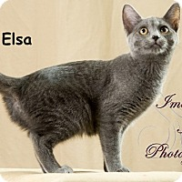 Adopt A Pet :: Elsa - Oklahoma City, OK