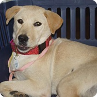 Adopt A Pet :: Ruby - Holly Springs, NC