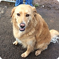 Adopt A Pet :: Pixie - Vancouver, WA