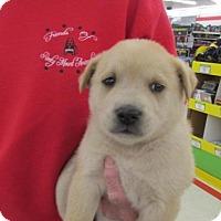 Adopt A Pet :: Shelley - Rocky Mount, NC