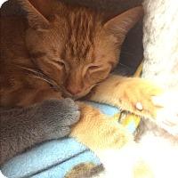 Adopt A Pet :: Puddin - Lunenburg, MA