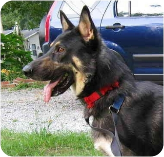 German Shepherd Dog Dog for adoption in Pike Road, Alabama - Marx