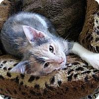 Adopt A Pet :: April - Irvine, CA