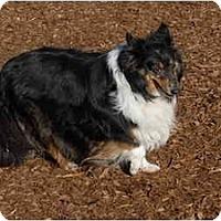 Adopt A Pet :: Chloe - Ft. Myers, FL