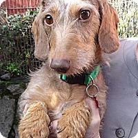 Adopt A Pet :: ZEE - Portland, OR