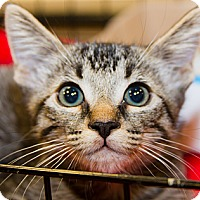 Adopt A Pet :: Georgie - Irvine, CA