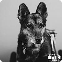 Adopt A Pet :: Martin - Portland, OR