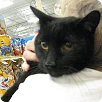 Adopt A Pet :: Zoidberg - Logan, UT