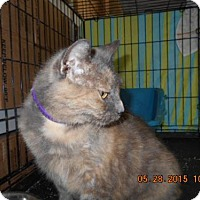 Adopt A Pet :: Blondie A - Orlando, FL