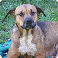 Adopt A Pet :: Kalie - Palm Harbor, FL