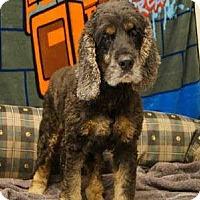 Adopt A Pet :: Oscar - Alpharetta, GA