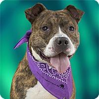 Adopt A Pet :: Reece - Cincinnati, OH