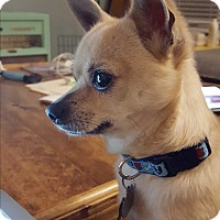 Adopt A Pet :: Tango - Edmonton, AB