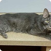 Adopt A Pet :: Bobbie - Noblesville, IN