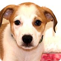 Adopt A Pet :: Rocket~adopted! - Glastonbury, CT