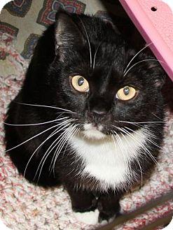 Domestic Shorthair Cat for adoption in Lovingston, Virginia - Karen