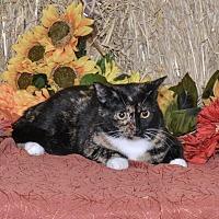 Adopt A Pet :: Gemi - Delmont, PA