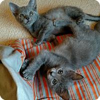 Adopt A Pet :: Willow & Ivy - Monroe, NC