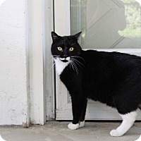 Adopt A Pet :: Buddy - Warwick, RI