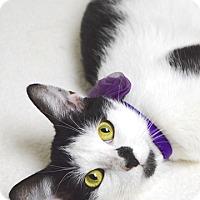 Adopt A Pet :: Tina - Dublin, CA