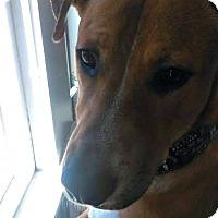 Adopt A Pet :: Cooper - Des Moines, IA