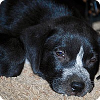 Adopt A Pet :: Rio-ADOPTION PENDING - Cranston, RI