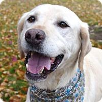 Adopt A Pet :: Hunter - Davison, MI