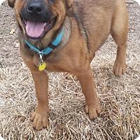 Adopt A Pet :: Timber meet me 12/16 - Manchester, CT