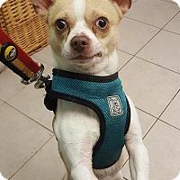 Adopt A Pet :: Jagger - Bloomfield, NJ