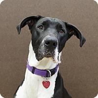 Adopt A Pet :: MooMoo - Ile-Perrot, QC