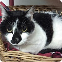 Adopt A Pet :: Oreo - Vancouver, BC