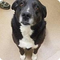 Adopt A Pet :: Bailey #164139 - Apple Valley, CA