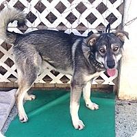 Adopt A Pet :: Lobo - Los Angeles, CA
