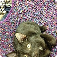 Adopt A Pet :: Samson - Fort Lauderdale, FL