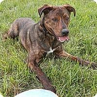 Adopt A Pet :: Yukon - Hamilton, ON