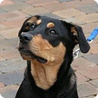 Adopt A Pet :: Faith - Rigaud, QC