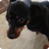 Adopt A Pet :: Bruiser - Malaga, NJ