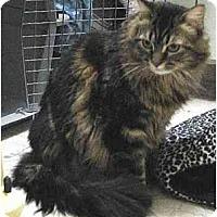 Adopt A Pet :: Tonette - Davis, CA