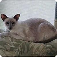 Adopt A Pet :: Maggie - Bonita Springs, FL
