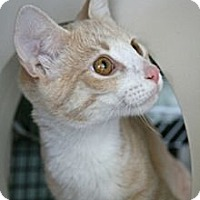 Adopt A Pet :: Marshall and Frost - Frederick, MD