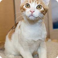 Adopt A Pet :: Bronson - Irvine, CA