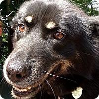 Adopt A Pet :: Ursa - Jefferson, NH