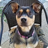 Adopt A Pet :: Birdie - Hartsville, TN