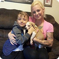 Adopt A Pet :: Hetty - Sacramento, CA