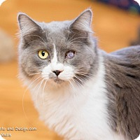 Adopt A Pet :: Wink - Fountain Hills, AZ